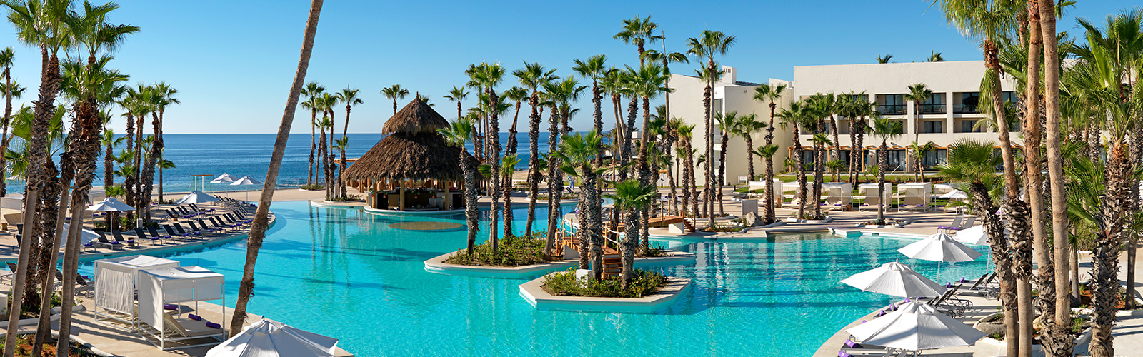 Paradisus Los Cabos pool and palm trees overlooking ocean