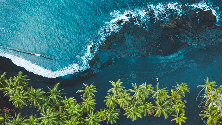 Overhead view of palm trees and a beach.