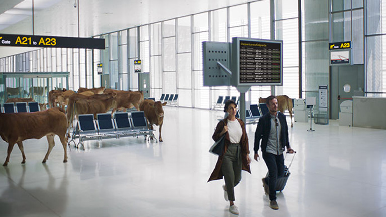 Guests walking by cattle in the airport