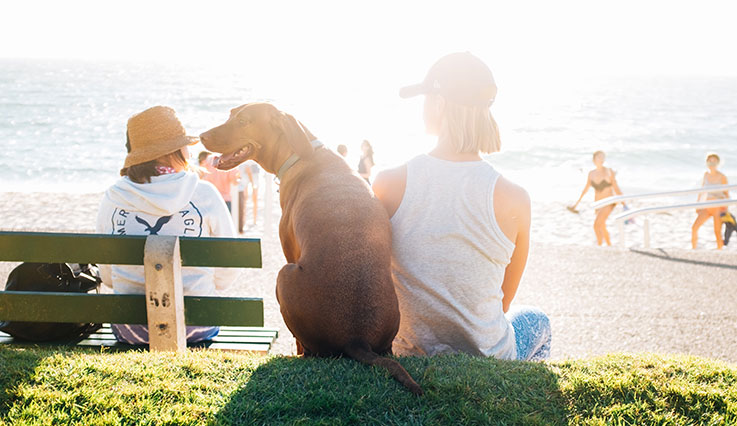 Woman sitting with dog looking at sunny ocean beach