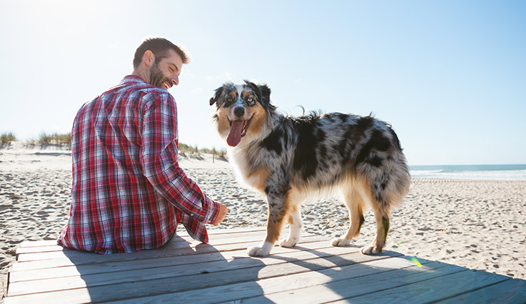 Man sitting on beach boardwalk with dog