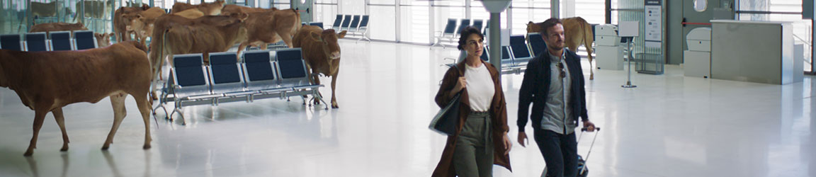 Couple walking through airport with cattle