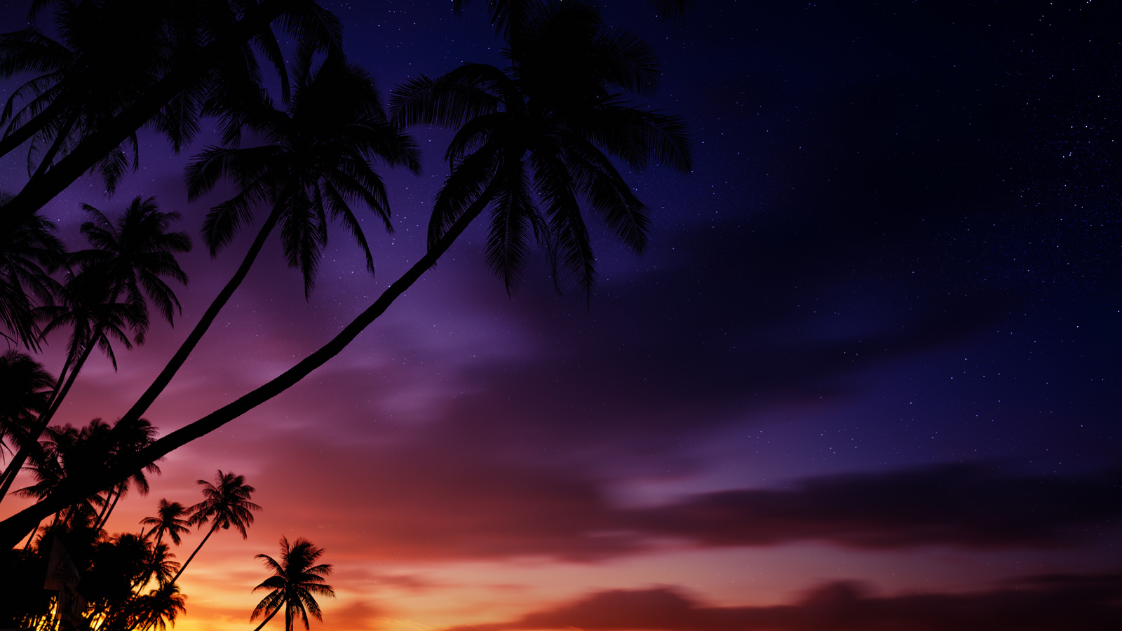 palm tree silhouette in front of twilight sky