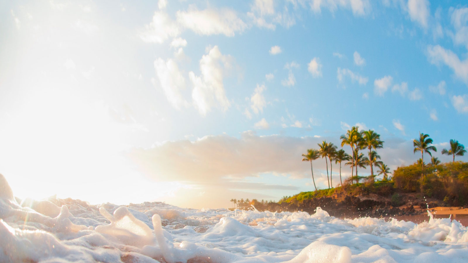 Ocean waves and palm trees in Hawaii