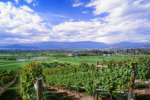 Showing slide 3 of 20 in image gallery, kelowna-british-columbia_winery-vineyards-golf-course
