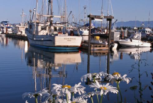 Showing slide 2 of 10 in image gallery, Comox