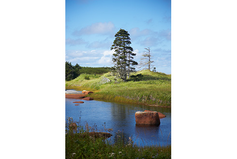 Showing slide 15 of 18 in image gallery, gander-newfoundland_creek