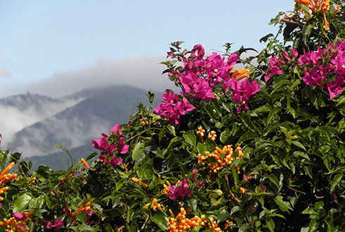 Showing slide 1 of 10 in image gallery, Colourful flowers blooming and mountains in San Jose, Costa Rica