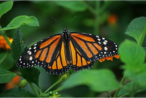 Showing slide 6 of 10 in image gallery, Orange butterfly on a plant in Costa Rica