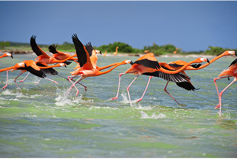 Showing slide 23 of 31 in image gallery, A group of birds flying out of the water
