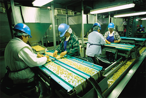 Showing slide 23 of 23 in image gallery, Sorting nuts, Kona, Hawaii