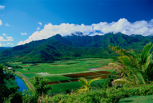Showing slide 20 of 41 in image gallery, Hanalei Valley, Kauai