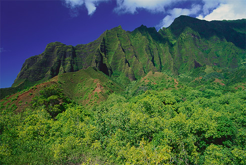 Showing slide 3 of 41 in image gallery, Lihue, Kauai