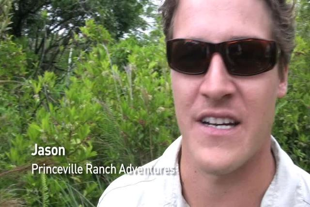 Showing slide 1 of 41 in image gallery, Princeville Ranch Adventures