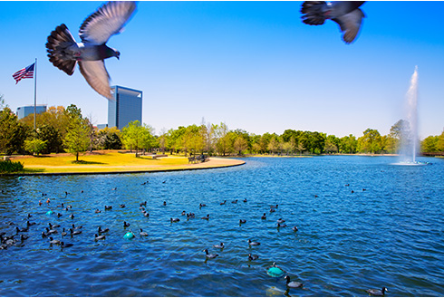 Showing slide 3 of 19 in image gallery, houston-texas_mcgovern-lake