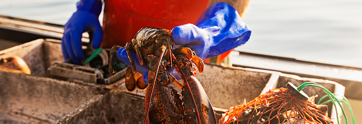 Shipping fresh lobster and fish in Canada