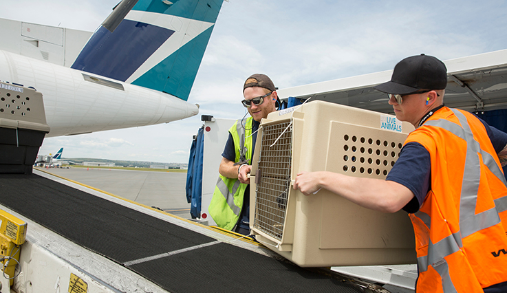 Shipping Restrictions Westjet Official Site