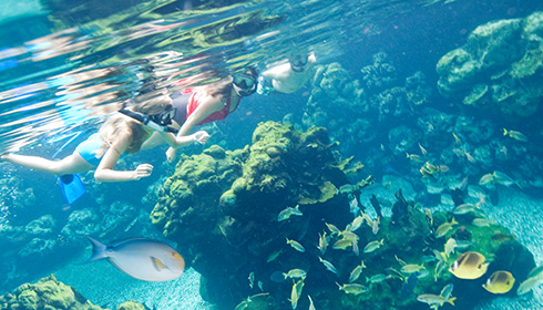 Showing slide 9 of 29 in image gallery, Snorkeling at Aulani