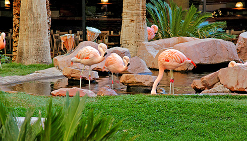 Image 8 de 16, de la gallerie de photos : Flamands roses