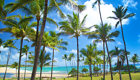 Magnificent Hilton Garden Inn Palm Beach Gardens Motif - Garden ...