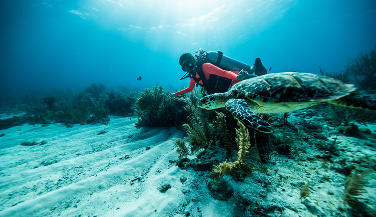Woman scuba diving with a Turtle in Belize.