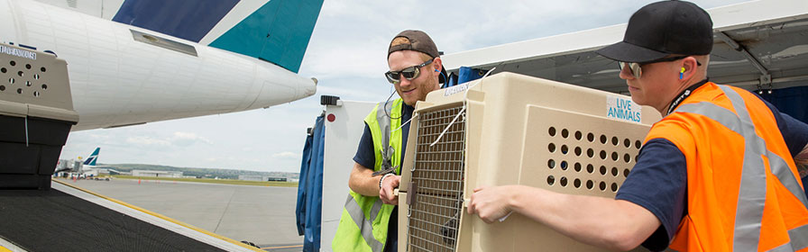 Cargo crew carrying a kennel