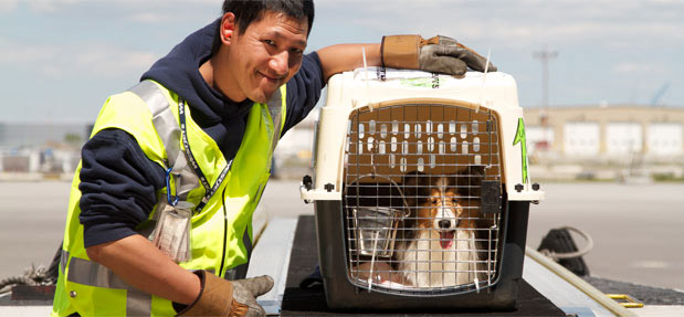 WestJet baggage handler with a dog in a kennel